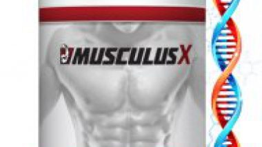 Musculus X